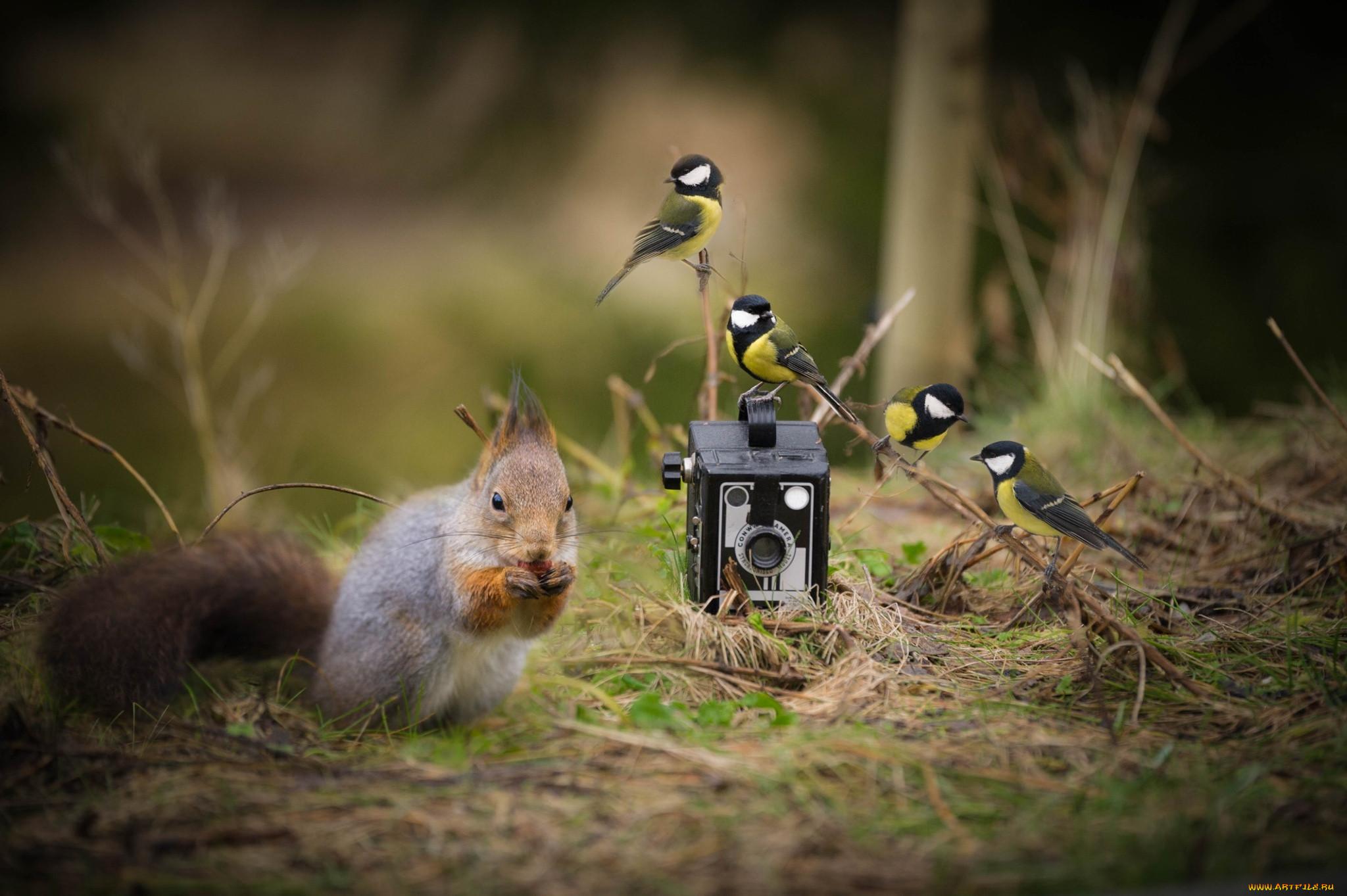 способов камера для фотографирования птичек просто